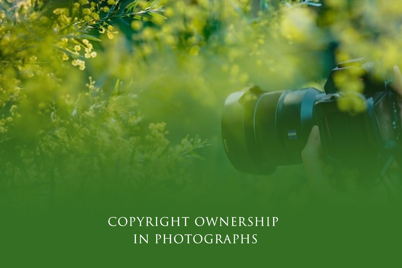 Copyright Ownership in Photographs